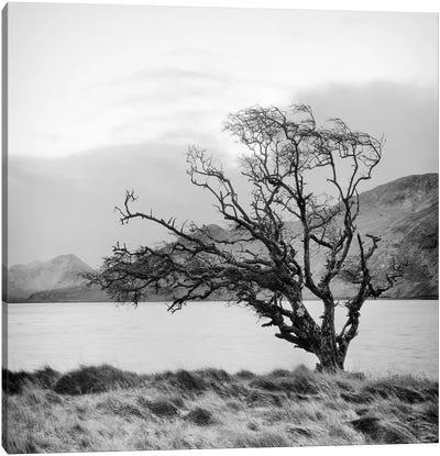 Connemara Tree I Canvas Art Print