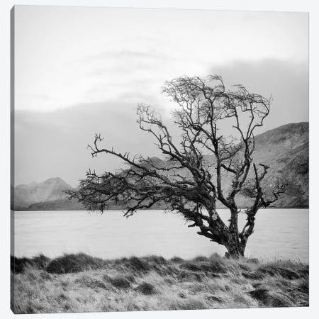Connemara Tree I Canvas Print #7154} by Geoffrey Ansel Agrons Canvas Print