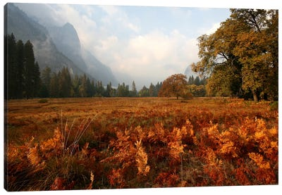 Meadow Canvas Art Print