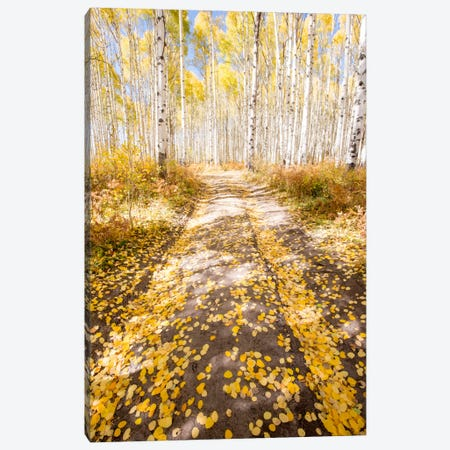 Road To Fall Canvas Print #7179} by Dan Ballard Canvas Wall Art