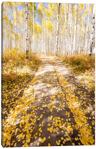 Road To Fall Canvas Art Print