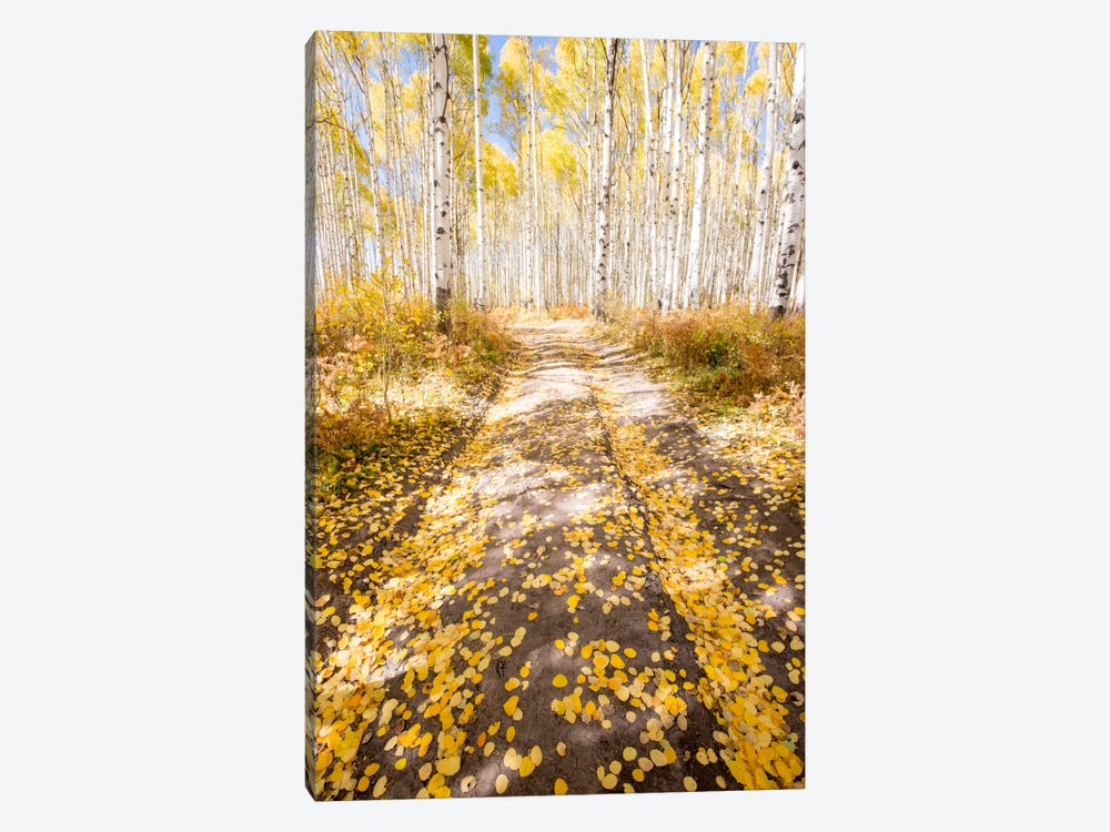 Road To Fall by Dan Ballard 1-piece Canvas Art Print