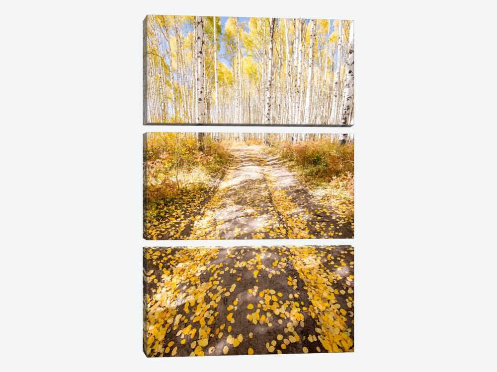 Road To Fall by Dan Ballard 3-piece Canvas Print