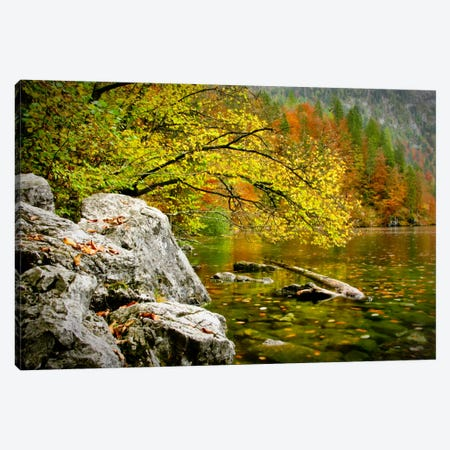 Reaching Color Canvas Print #7180} by Dan Ballard Canvas Print