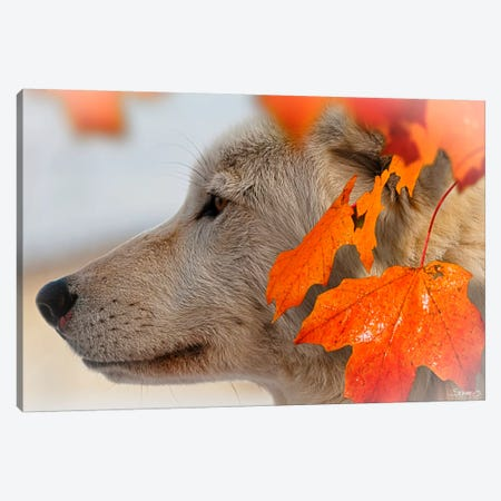 Wolf Profile Autumn Leaves Canvas Print #7196} by Gordon Semmens Canvas Art Print