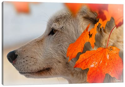 Wolf Profile Autumn Leaves Canvas Art Print