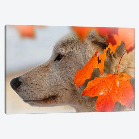 Wolf Profile Autumn Leaves Canvas Print #7196} by Gordon Semmens Canvas Art Print