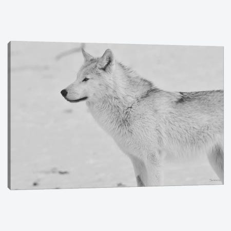 White Wolf Canvas Print #7198} by Gordon Semmens Canvas Art