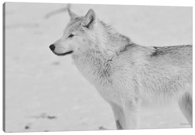 White Wolf 2 Canvas Art Print