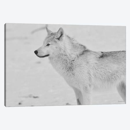 White Wolf Canvas Print #7198} by Gordon Semmens Canvas Art