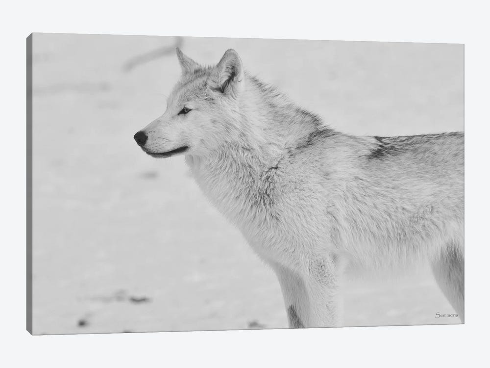 White Wolf by Gordon Semmens 1-piece Canvas Artwork