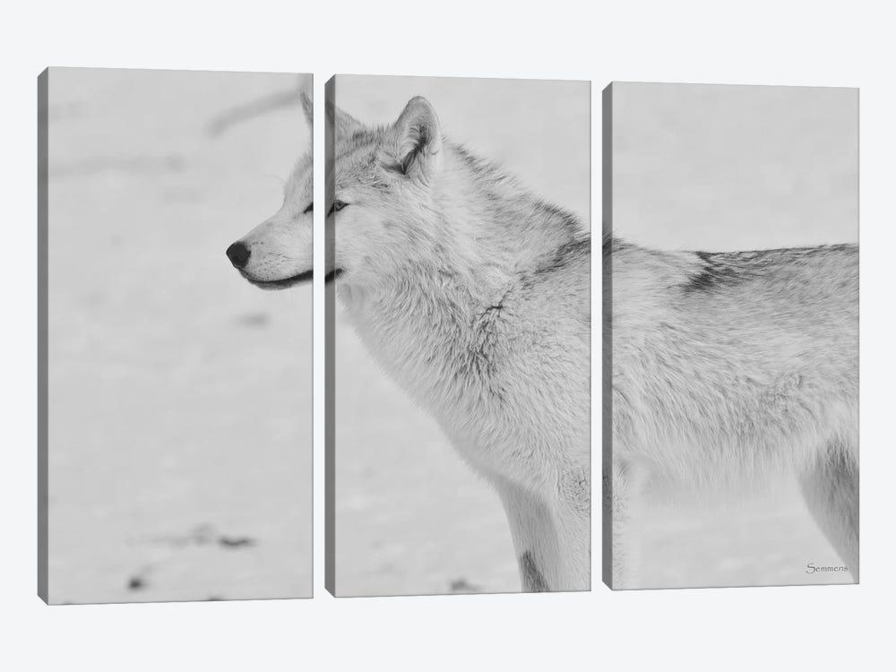 White Wolf by Gordon Semmens 3-piece Canvas Art