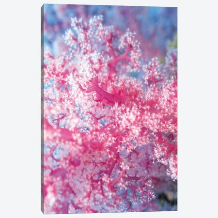 Precious Pink Coral Canvas Print #7207} by Unknown Artist Art Print