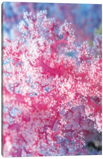 Precious Pink Coral Canvas Print #7207
