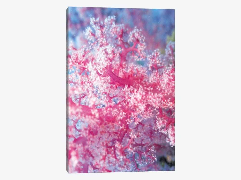 Precious Pink Coral 1-piece Canvas Art
