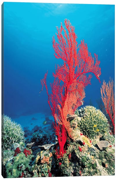 Red Coral Canvas Art Print