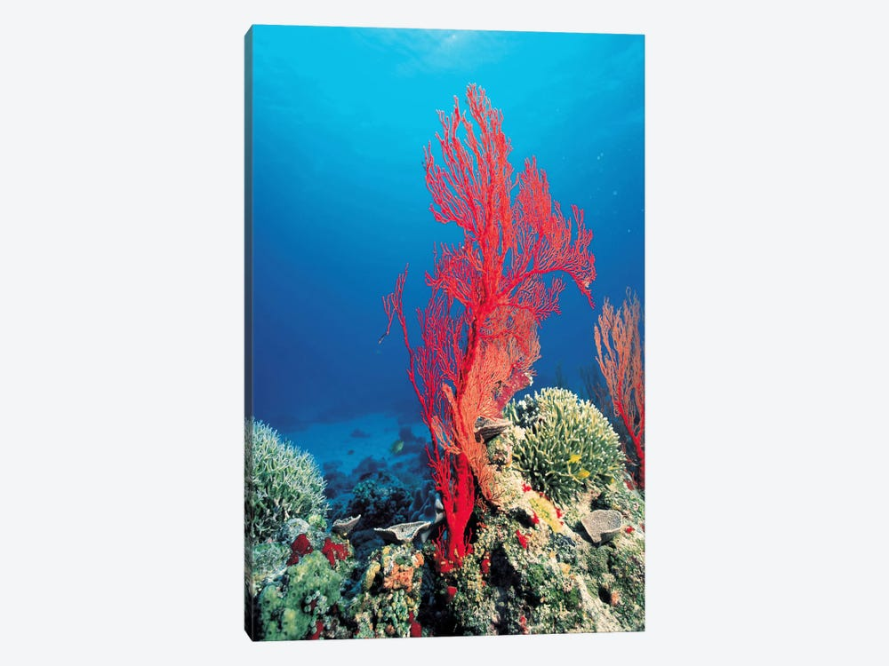 Red Coral 1-piece Canvas Wall Art