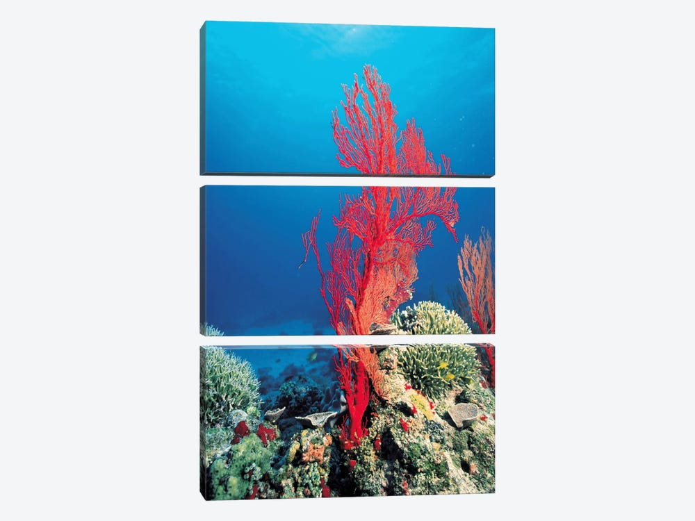 Red Coral 3-piece Canvas Artwork
