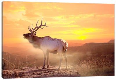 Elk Sunrise In The Badlands Canvas Print #7305