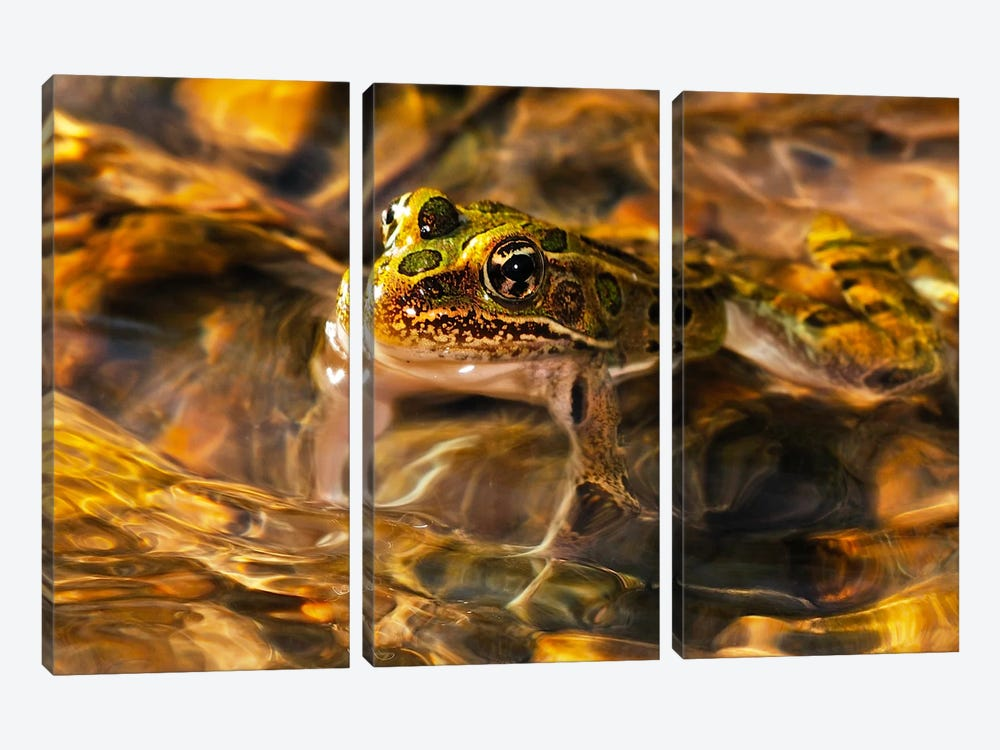 Frog 3-piece Canvas Wall Art