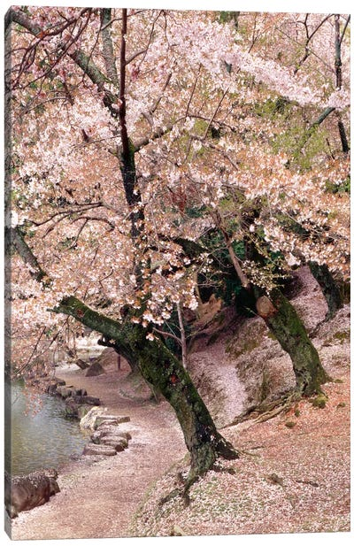 Cherry Blossom Lane Canvas Art Print