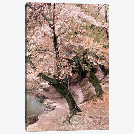 Cherry Blossom Lane Canvas Print #7314} by Monte Nagler Canvas Art Print