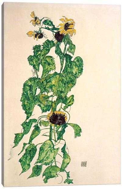 Sunflowers II Canvas Print #8309