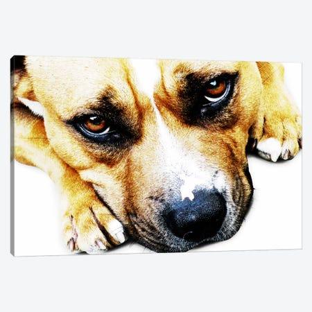 Bull Terrier Eyes Canvas Print #8761} by Michael Tompsett Art Print