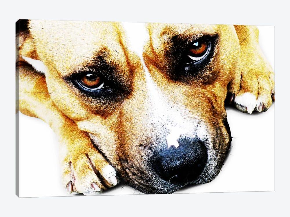 Bull Terrier Eyes by Michael Tompsett 1-piece Art Print