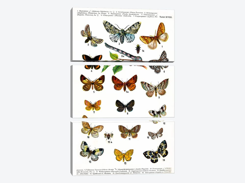 European Butterflies 3-piece Canvas Art Print
