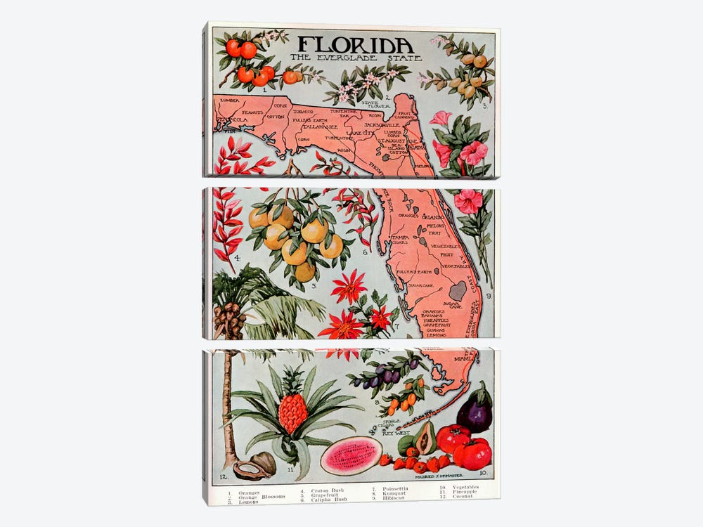 State Map of Florida (Natural Resources) - Vintage Poster by Unknown Artist 3-piece Canvas Print
