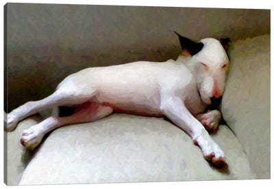 Bull Terrier Canvas Print #8889