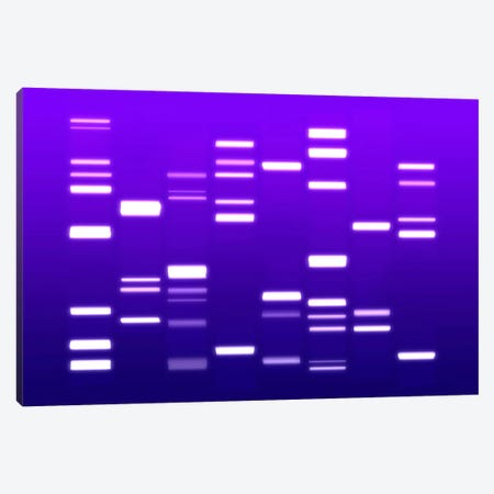 DNA Genetic Code (Purple) Canvas Print #8903} by Michael Tompsett Canvas Art Print
