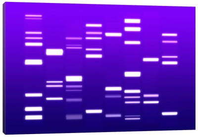 DNA Genetic Code (Purple) Canvas Art Print
