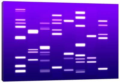 DNA Genetic Code (Purple) Canvas Print #8903