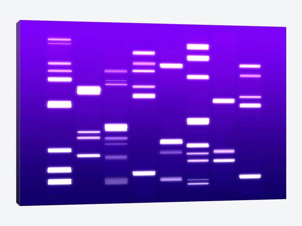 DNA Genetic Code (Purple) by Michael Tompsett 1-piece Canvas Wall Art