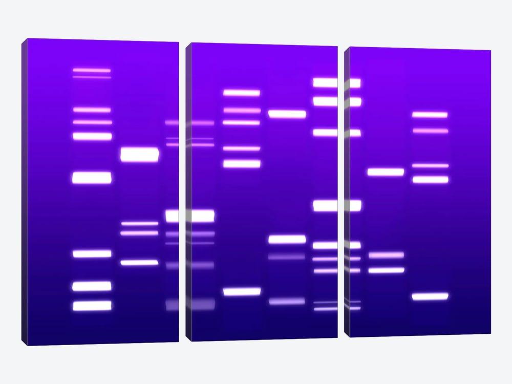DNA Genetic Code (Purple) by Michael Tompsett 3-piece Canvas Art
