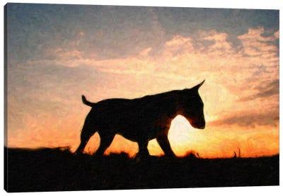 English Bull Terrier Canvas Art Print