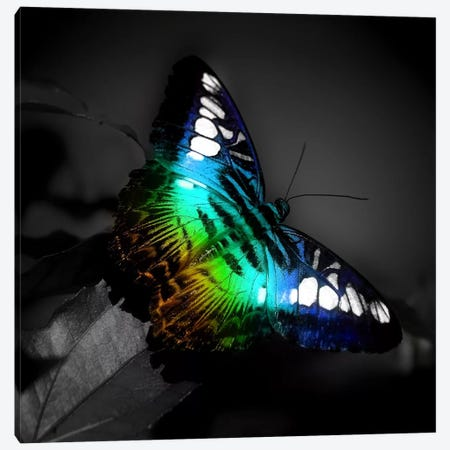 Colorful Butterfly Photographic Canvas Print #9032} by Unknown Artist Canvas Wall Art
