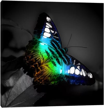 Colorful Butterfly Photographic Canvas Art Print