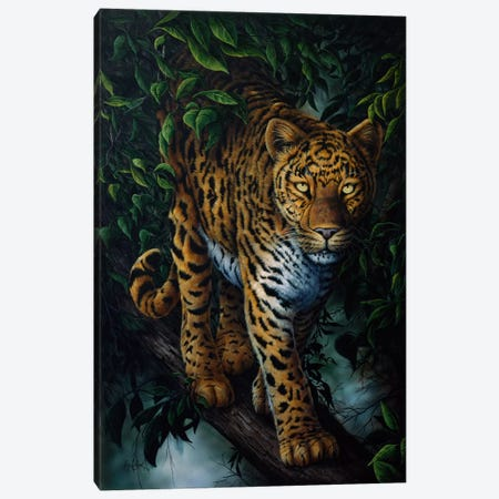 Watchful Eyes (Tiger) Canvas Print #9060} by Jenny Newland Canvas Art Print