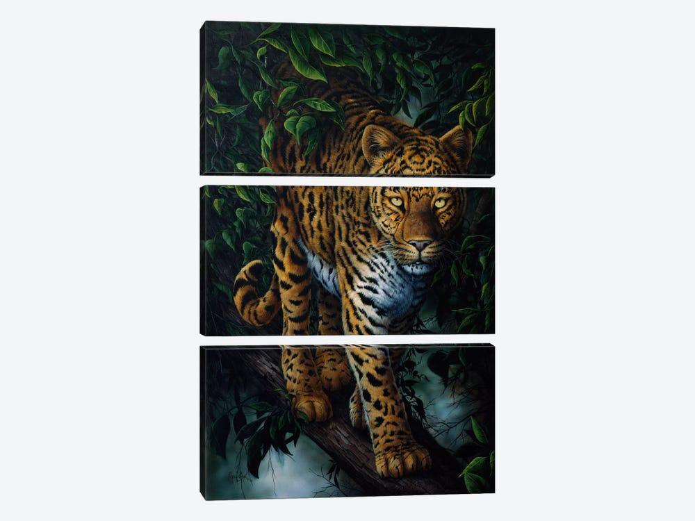 Watchful Eyes (Tiger) by Jenny Newland 3-piece Art Print