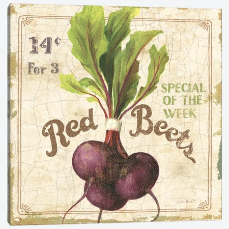 Red Beets (On Special III) Canvas Print #9100} by Lisa Audit Canvas Artwork