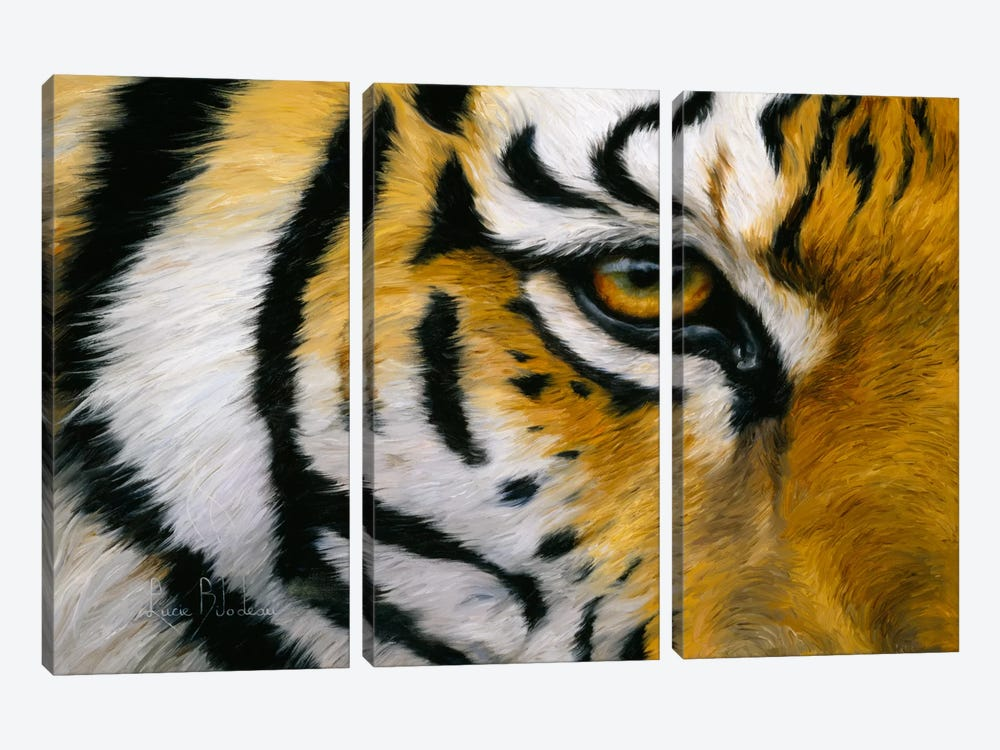 Eye of The Tiger by Lucie Bilodeau 3-piece Canvas Wall Art