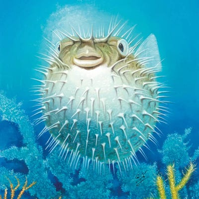 puffer fish canvas wall art by durwood coffey
