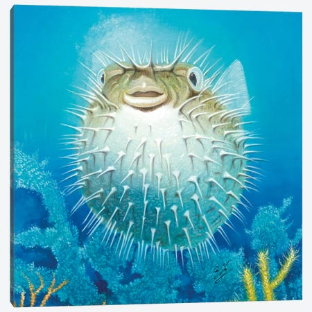 Puffer Fish Canvas Print #9231} by Durwood Coffey Canvas Art