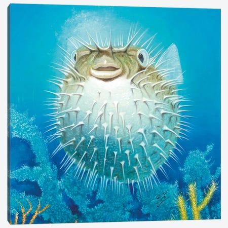 Puffer Fish Canvas Print #9231} by Durwood Coffey Canvas Art