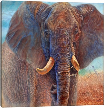 Giant (Elephant) Canvas Art Print