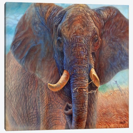 Giant (Elephant) Canvas Print #9239} by Cory Carlson Canvas Art