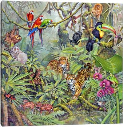 The Rainforest Canvas Art Print